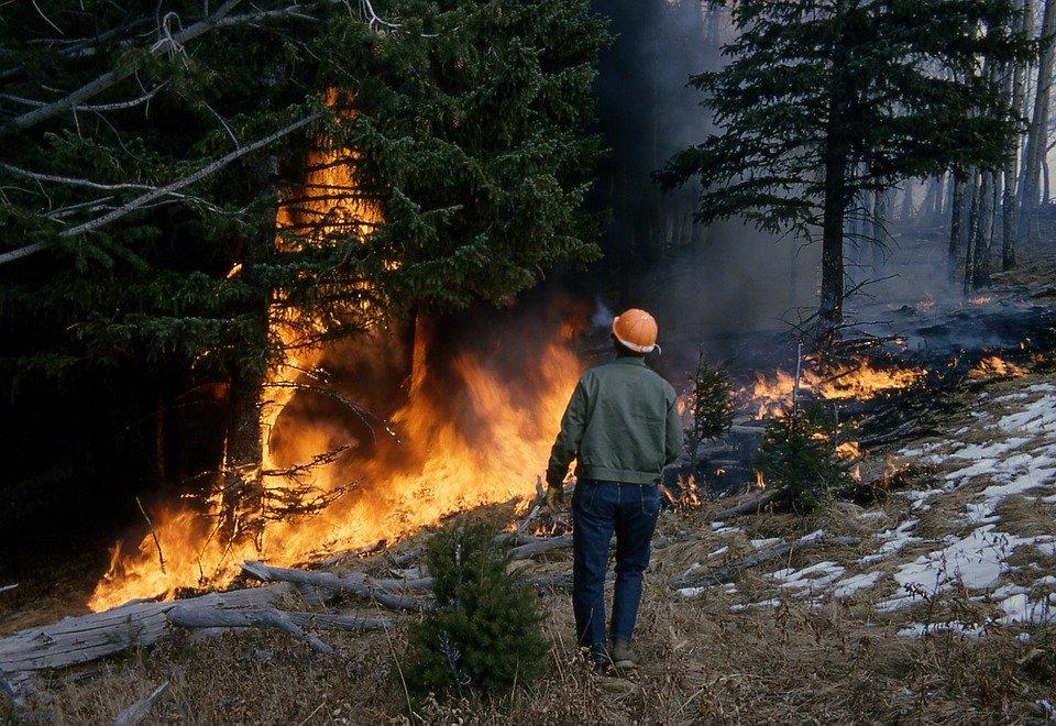 V Severskom rajone gorit les