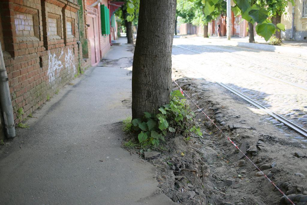 Ulica v centre Krasnodara mozhet ostat'sya bez derev'ev