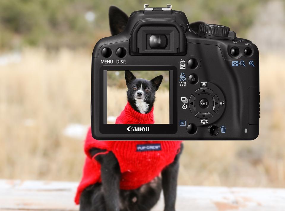 Минприроды обязал регионы снимать отлов животных на камеру