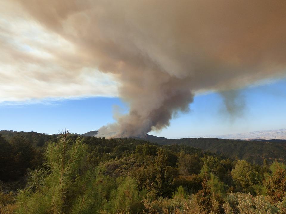 На Кубани за последнюю неделю огонь прошел больше 100 гектаров леса