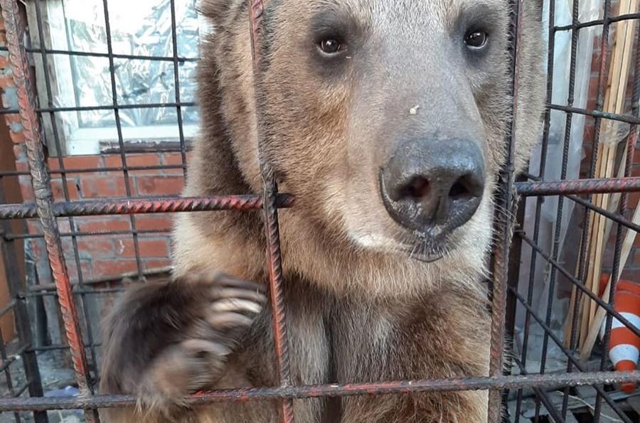В Краснодаре во дворе многоэтажки бросили медведя