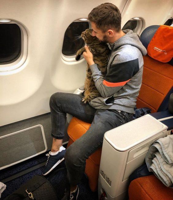 Мужчину не пустили на самолет с большим котом