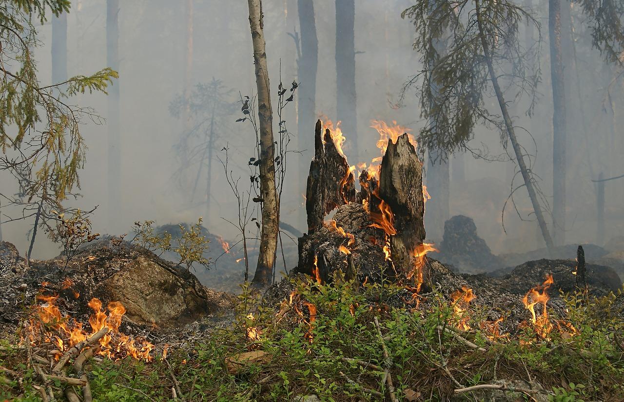Задержаны подозреваемые в поджоге лесов в Краснодарском крае