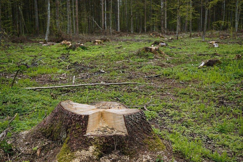 В Сочинском национальном парке вырубили деревьев на 10 млн рублей