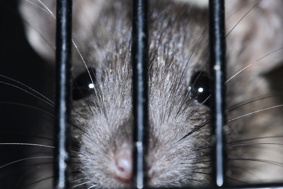 Новороссийская крыса оставила без света целый район