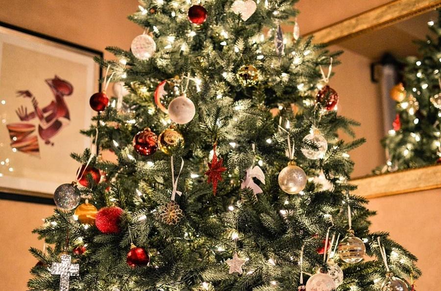 Новогодняя елка: эксперты рассказали, как правильно ее выбрать