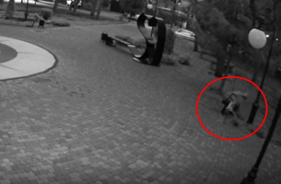 Власти Анапы требуют вернуть украденный куст можжевельника