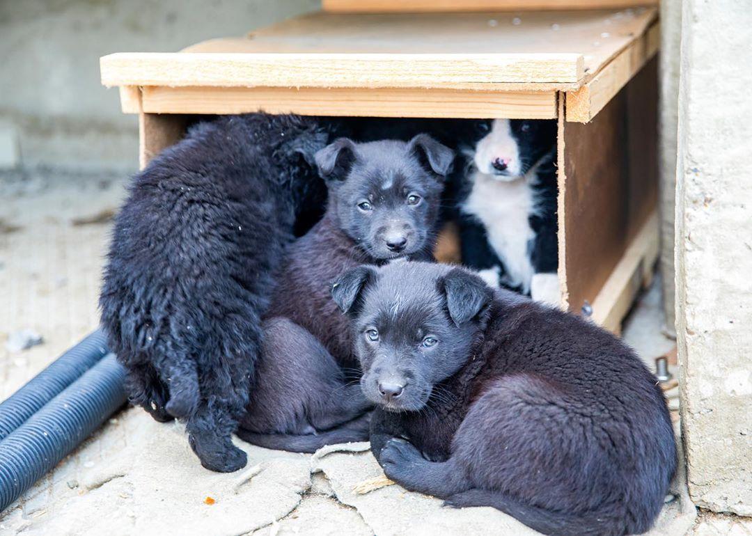 Собаки со стройки Крымского моста ищут новых хозяев
