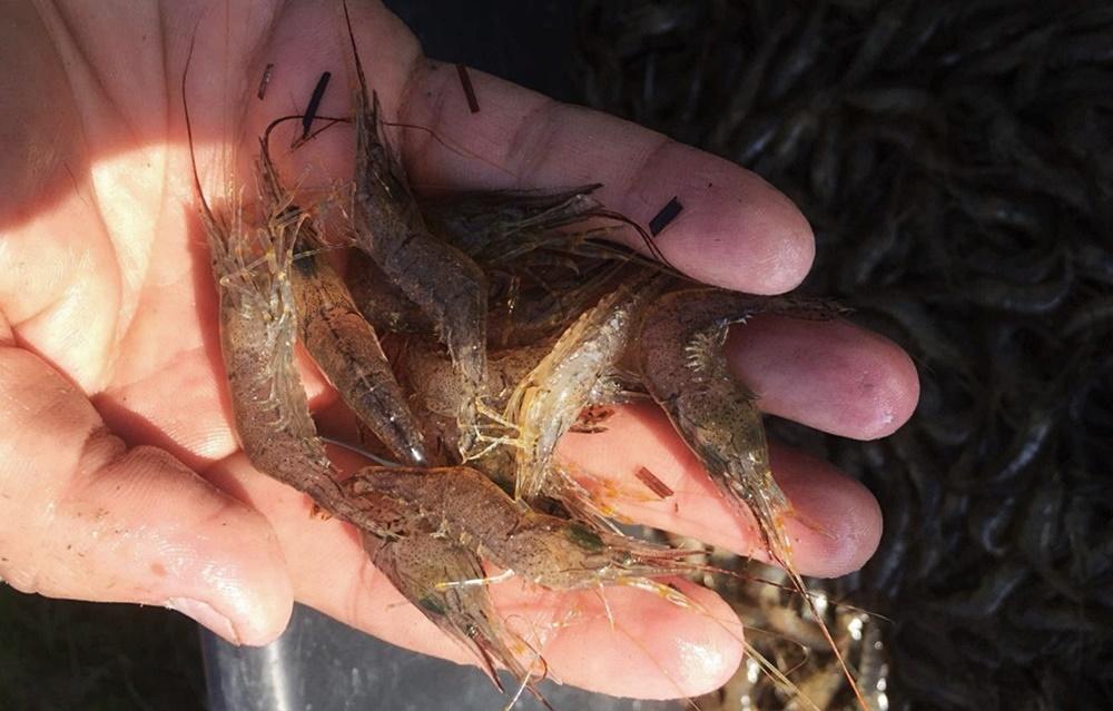 На Кубани посадили в тюрьму рыбака