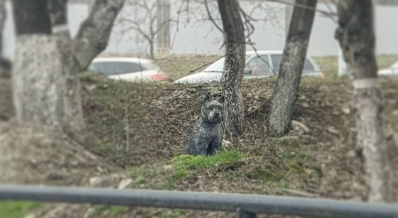 В Новороссийске верная собака год жила на месте ДТП, где погиб ее хозяин
