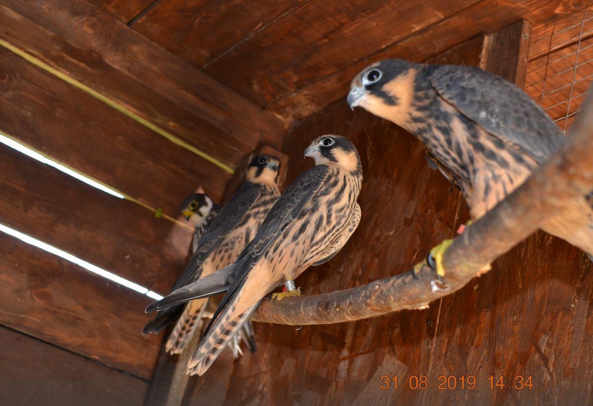 Как и все, я работаю на обычной работе, а в свободное время спасаю диких птиц