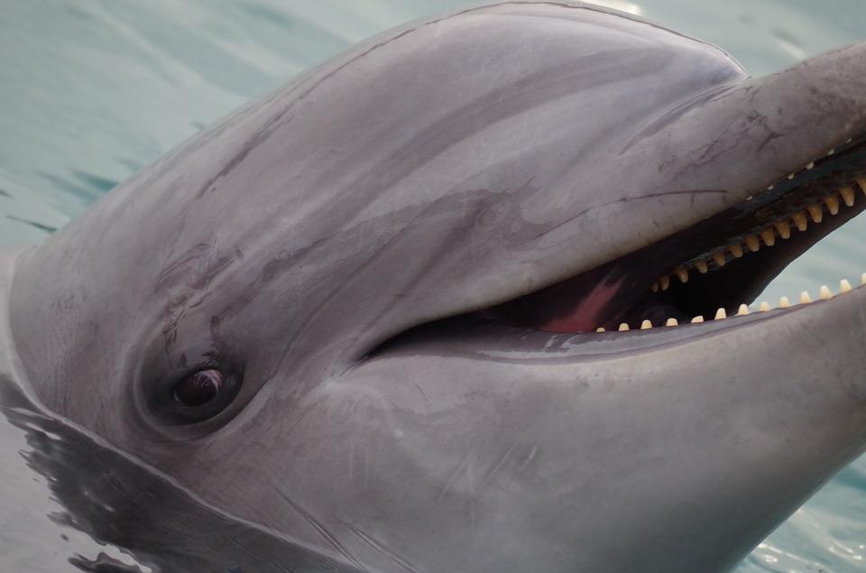 Как стать волонтером по спасению дельфинов?