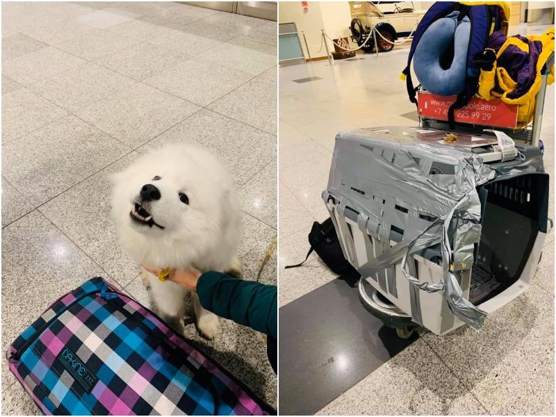 В Сочи сотрудники аэропорта уронили клетку с собакой с погрузчика