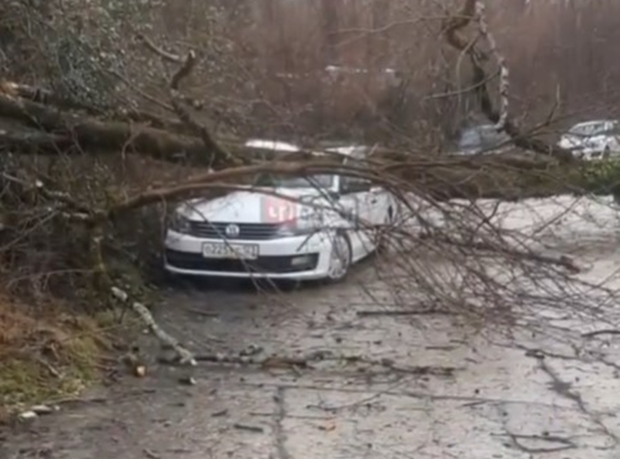 В Сочи сильный ветер повалил деревья и заборы