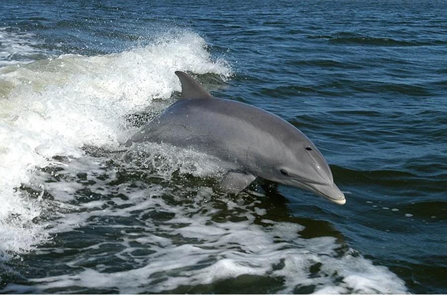 Ученые заявили о сокращении численности дельфинов в Черном море