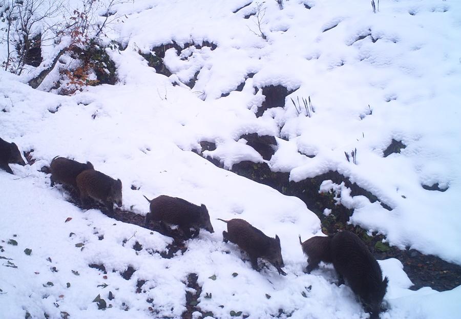 Стала известна численность животных в нацпарке Сочи после зимовки