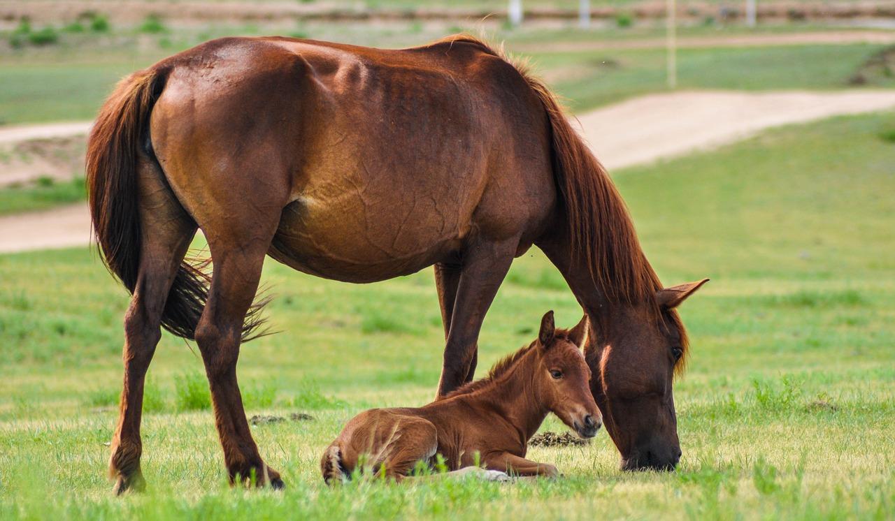 На Кубани спасатели достали из оврага беременную лошадь