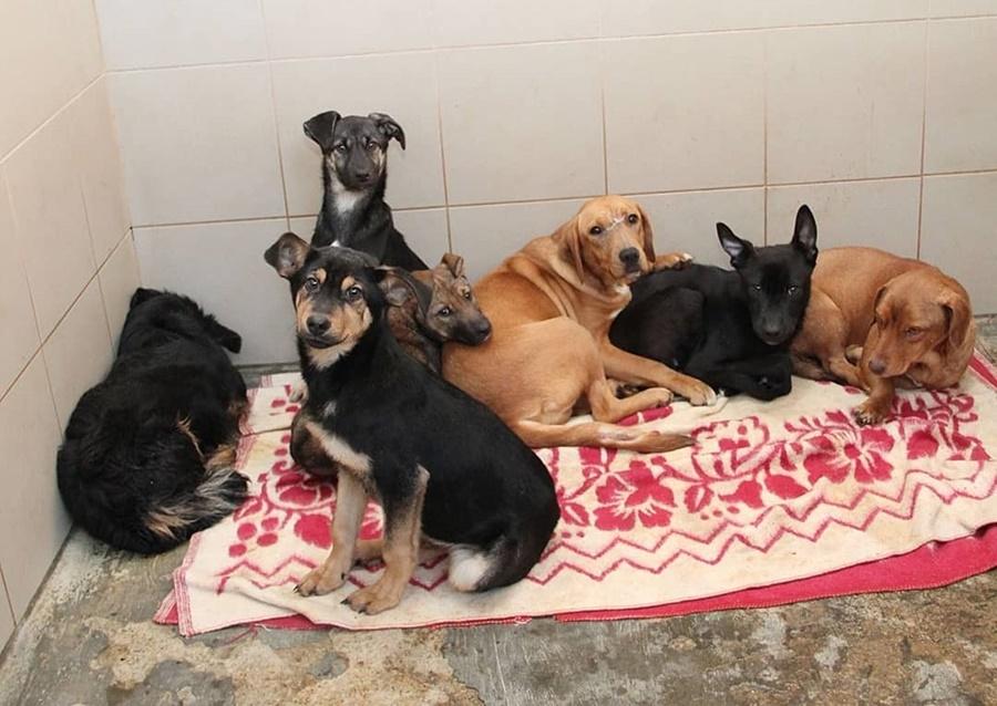 Более 500 животных в «Краснодоге» на грани гибели из-за коронавируса