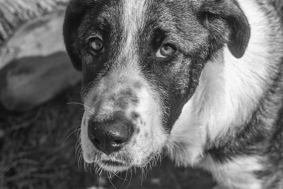 Полиция нашла живодерку, которая привязала к машине собаку и протащила ее по дороге