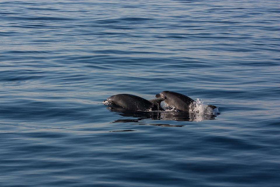 В Новороссийске спасли двух маленьких дельфинов