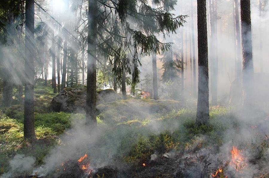 В Северском районе горит 20 га лесной подстилки