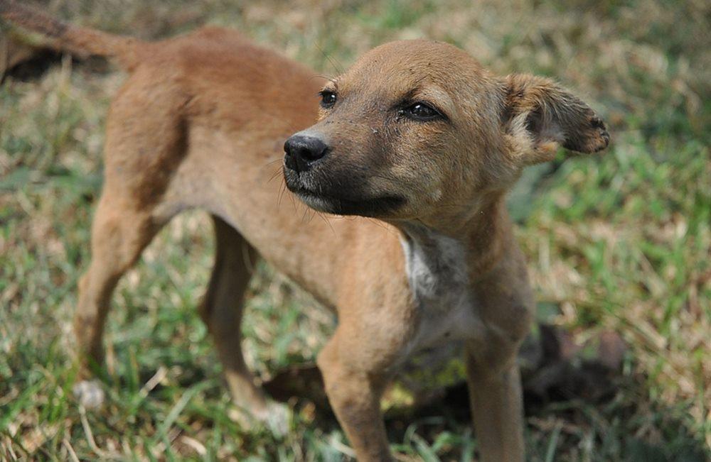 На Кубани выявлено 68 нарушений при отлове бездомных животных