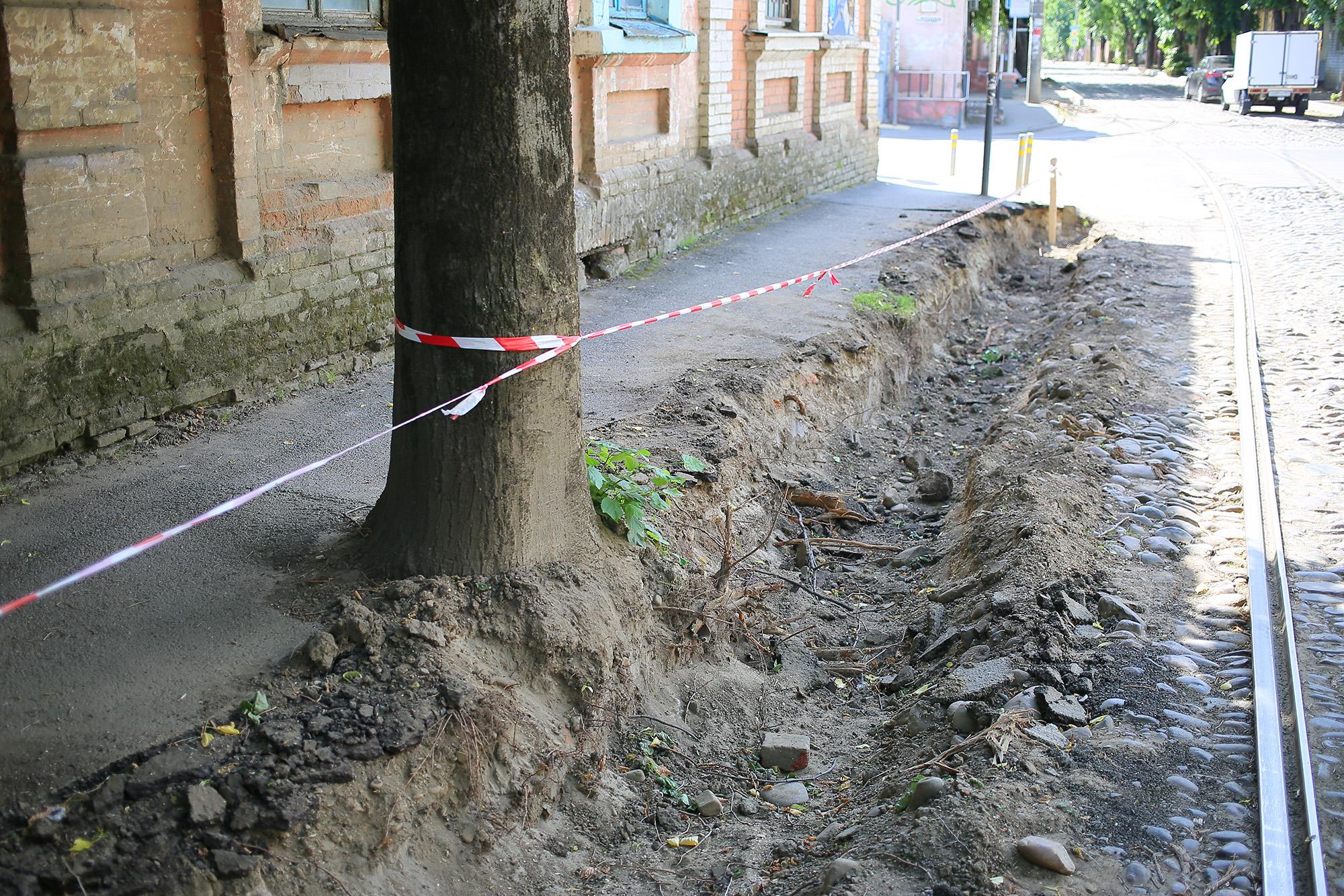 Улица в центре Краснодара может остаться без деревьев