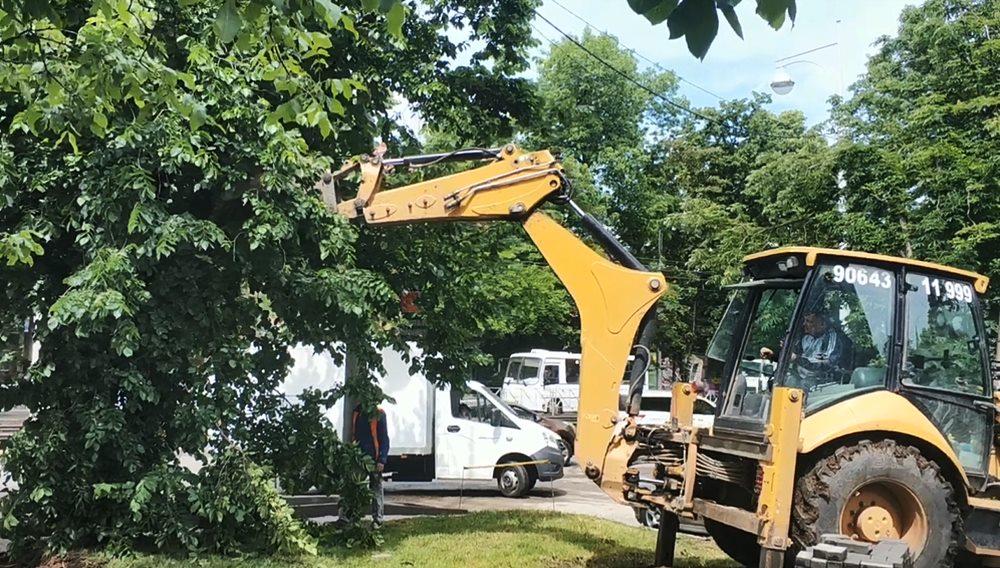 В Краснодаре рабочие обламывали дерево ковшом экскаватора