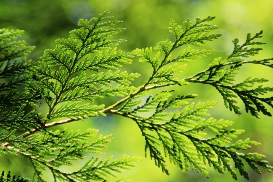 Жители Кубани могут получить 5 лет тюрьмы за 5 украденных деревьев
