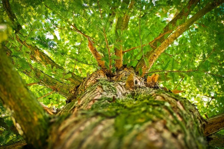 В Адлере спасатели сняли подростка с дерева