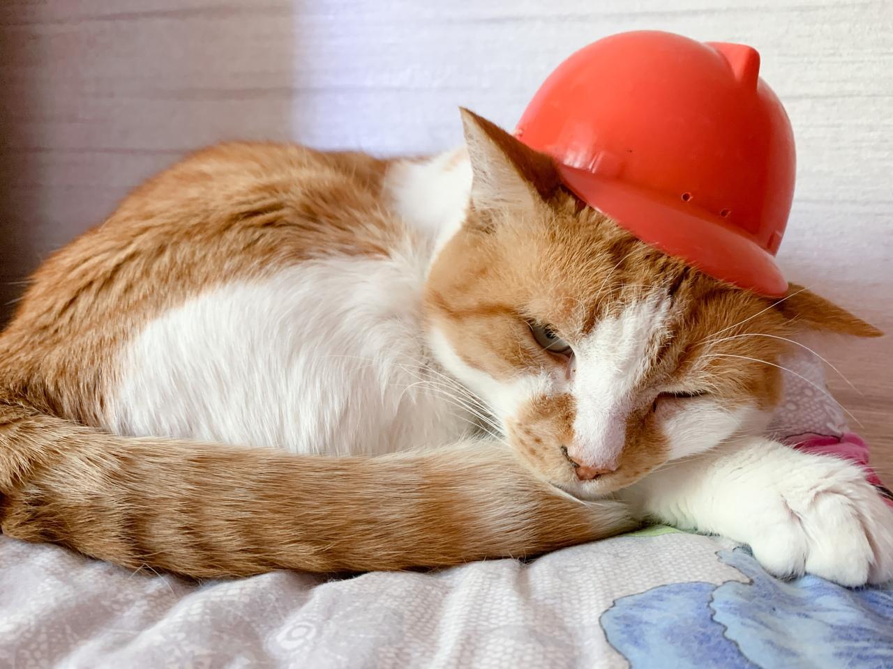 У знаменитого кота Мостика прошел первый рабочий день на новом месте в Симферополе