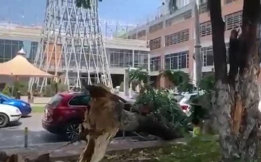 У ТЦ «Галерея Краснодар» на машины упало дерево