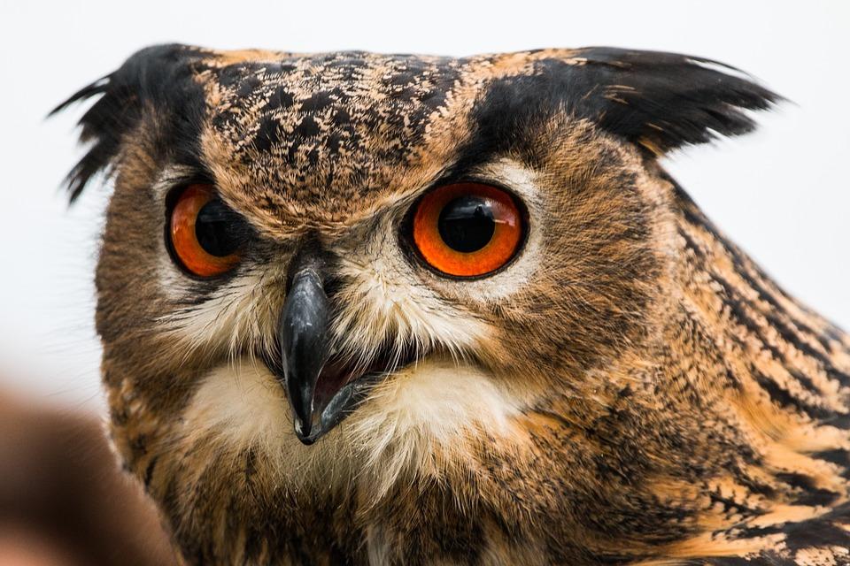 Подросток из Краснодарского края занимался контрабандой краснокнижных птиц и животных