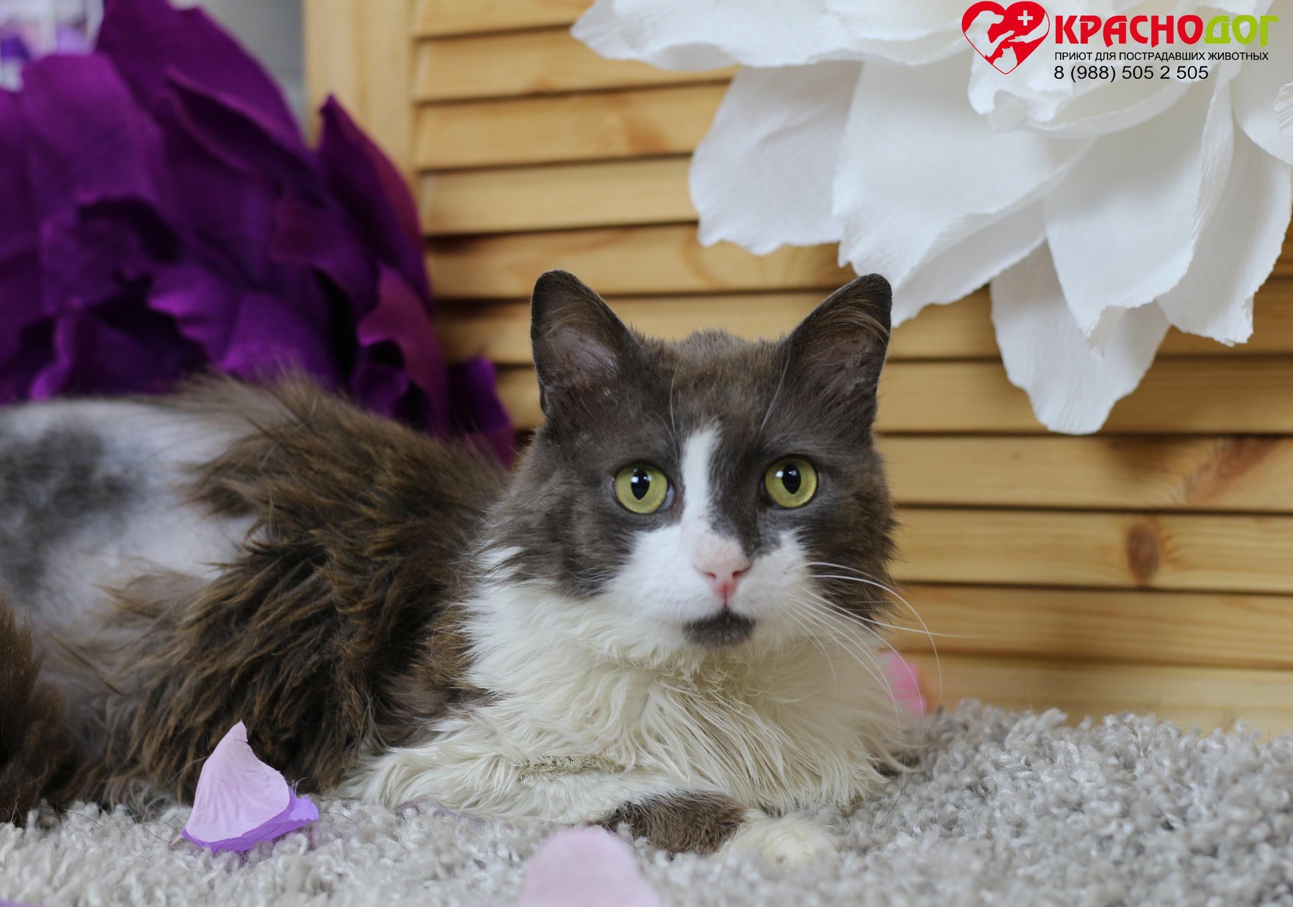 Ставка на Зеро: кот из «Краснодога» принесет большую удачу новым хозяевам