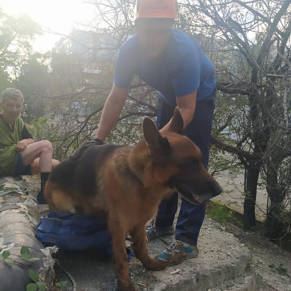 В Новороссийске спасатели достали из колодца немецкую овчарку