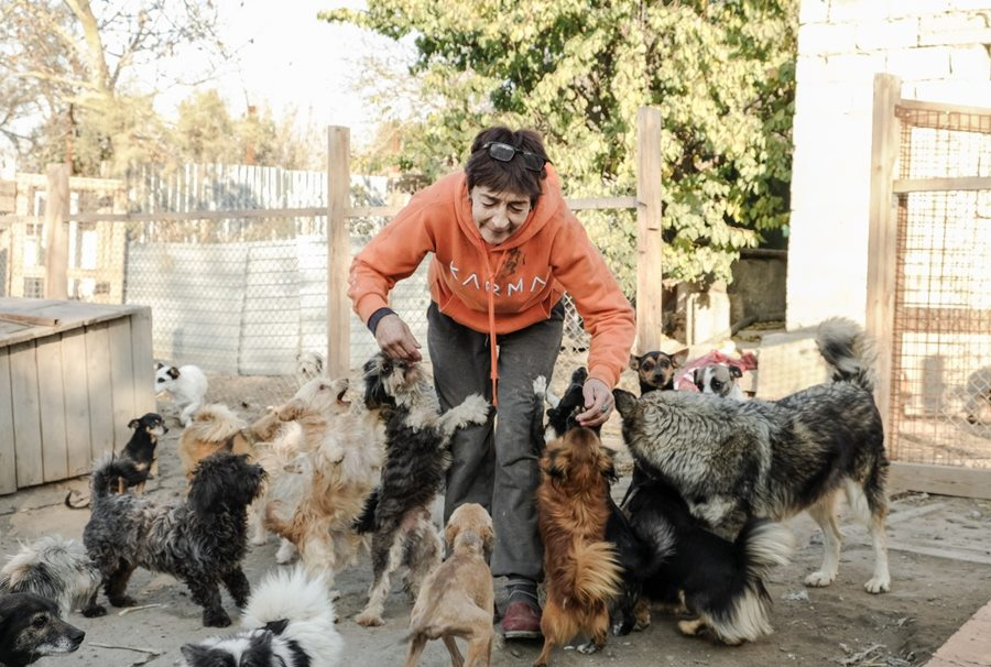 В Темрюке сгорел приют, где жили более 500 собак