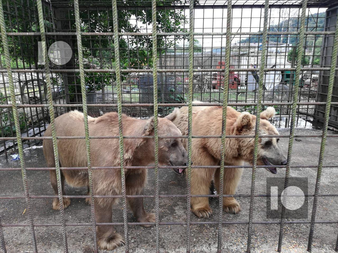 Вольер в Сочи, где жили растерзавшие мальчика медведи, был построен незаконно