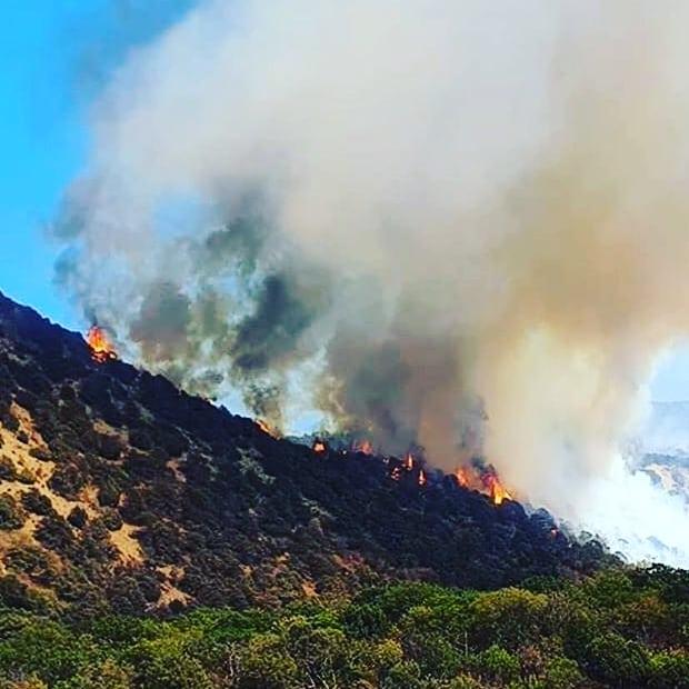 В Анапе сгорело 126 га леса, тушение пожара на Утрише продолжается