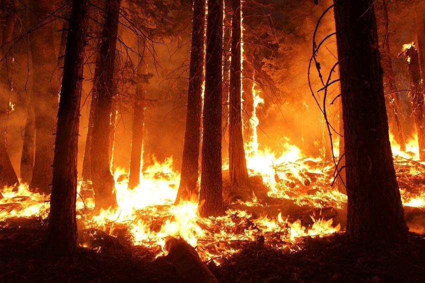 На Кубани по вине человека произошло три лесных пожара общей площадью более 18 га