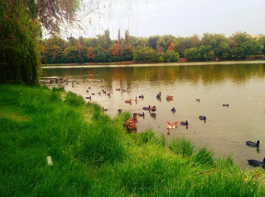 В Краснодаре 19 сентября стартует субботник с зарыблением Покровских озер