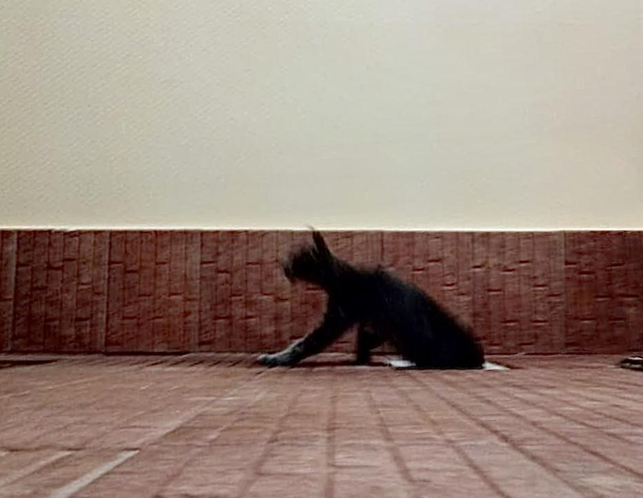 На Кубани кот задал немало работы спасателям