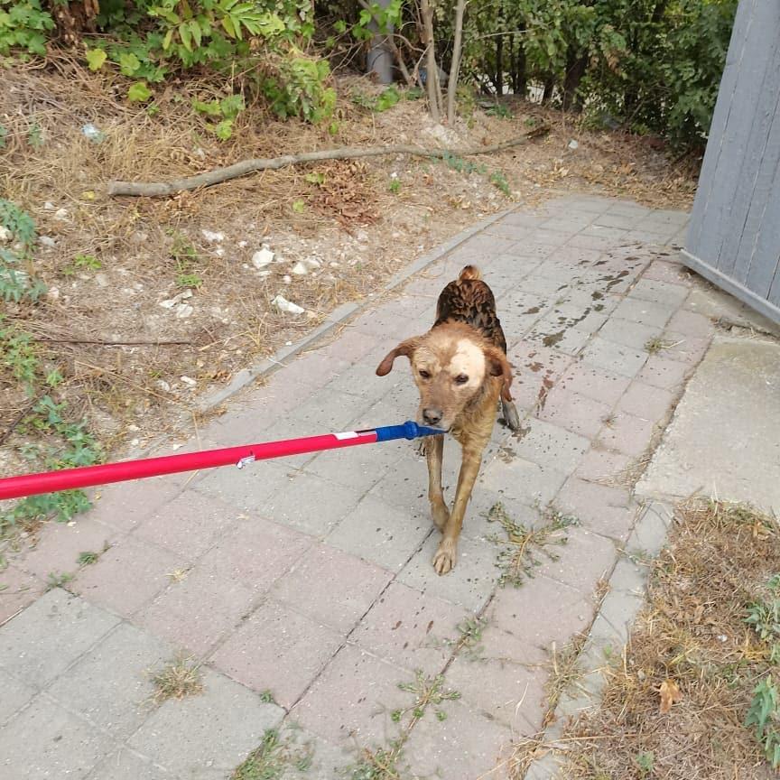 В Новороссийске на кладбище спасли собаку от гибели