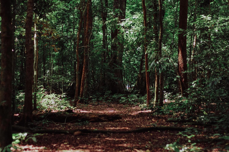 На Кубани продлили запрет на посещение лесов до 25 сентября