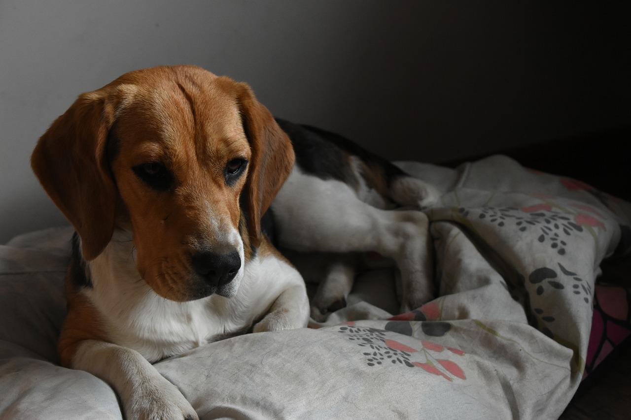 Живодер из Краснодара неоднократно избивал свою собаку