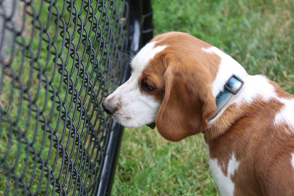 В Госдуме отреагировали на жестокое избиение собаки в Краснодаре