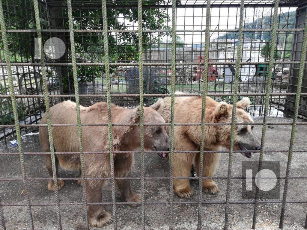 В Сочи пойдет под суд владелец вольера с медведями, которые растерзали мальчика