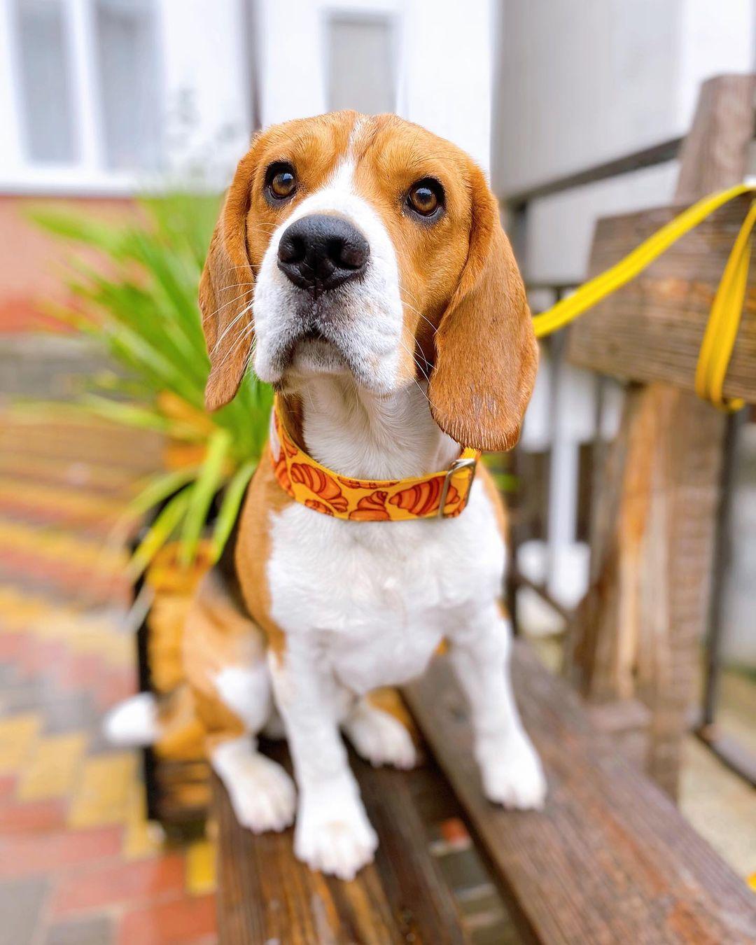 Сотрудника аэропорта Сочи не станут увольнять за издевательство над собакой