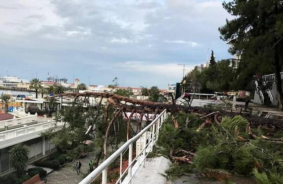 На центральной набережной Сочи рухнула 20-метровая сосна
