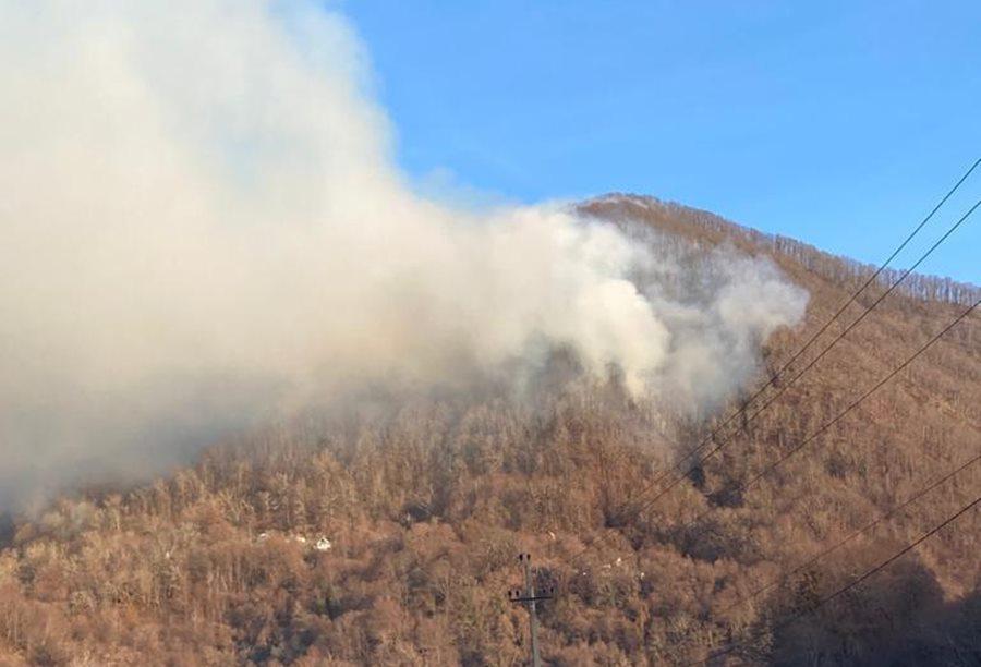В нацпарке Сочи произошел крупный лесной пожар