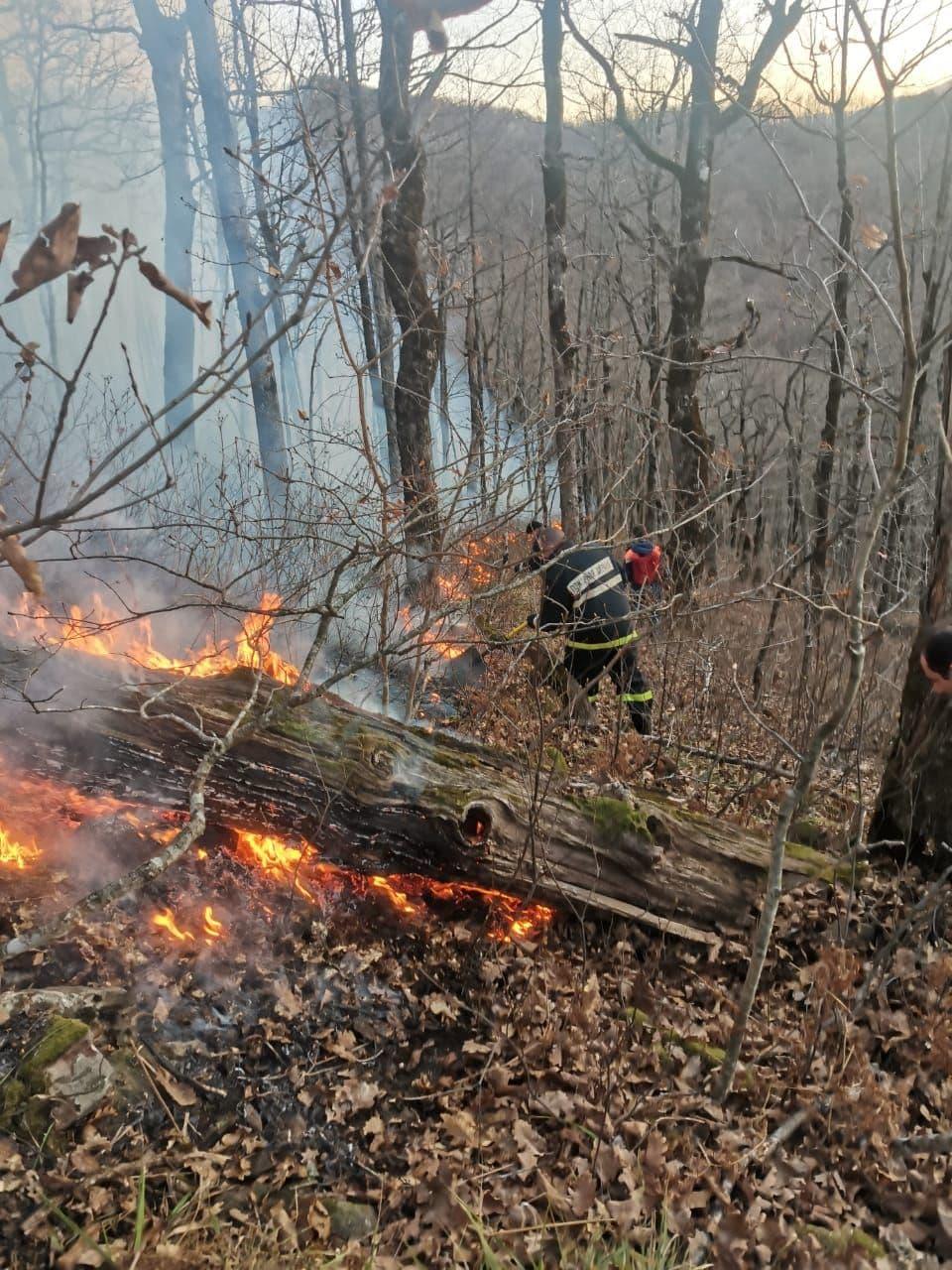 На Кубани потушили лесные пожары, которые произошли по вине человека